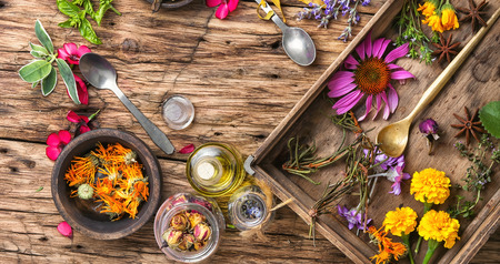 healer: Herbs medicine.Set of herbs, plants and flower in a wooden box