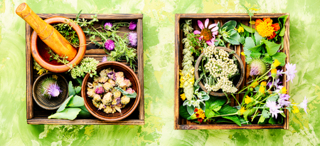 Various raw medical herbs and flowers.Alternative medicine concept 스톡 콘텐츠