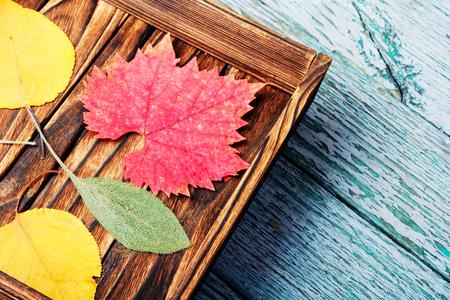 A wooden box with fallen autumn foliage. Herbarium.