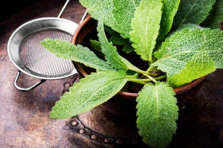 Sage,healing herbs in wooden box on table.Herbal medicine