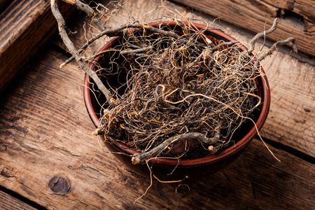 Maral root, medicinal plant of Siberian medicine.Dry roots.Herbal medicine