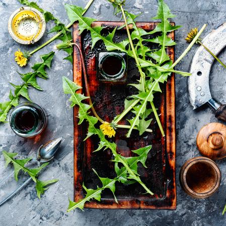 Medicinal plant dandelion or Taraxacum officinale. Stock Photo