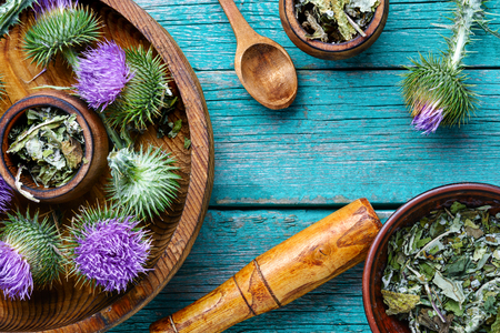 Medical plants flowers.Milk thistle or Silybum marianum. Alternative medicine Stock Photo