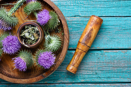 Medical plants flowers.Milk thistle or Silybum marianum. Healing herbs on wooden table Stock Photo