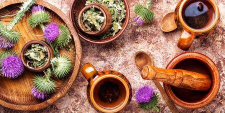 Medicinal plant thistle.Pink thorny thistle flower.Silybum marianum.Herbal tea