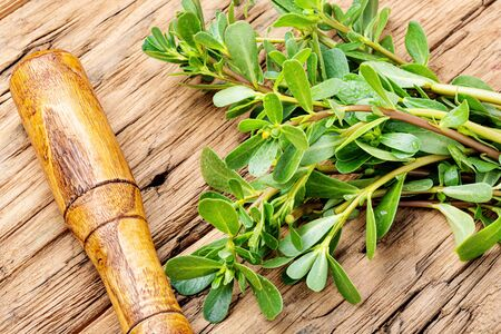 Fresh medicinal purslane on the old wooden background.Therapeutic herbs.Herbal medicine 写真素材