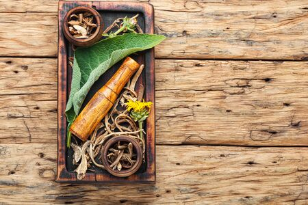 Roots and rhizomes of elecampane.Medicinal plant inula Фото со стока