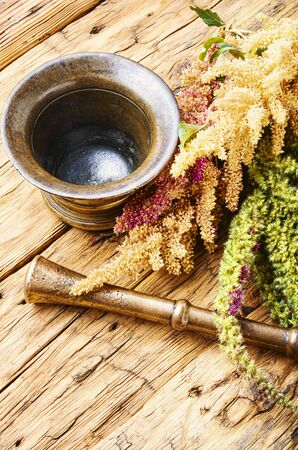 Amaranth or amaranthus.Medicinal herbs, herbal medicine.Amaranth inflorescences on a table with mortars