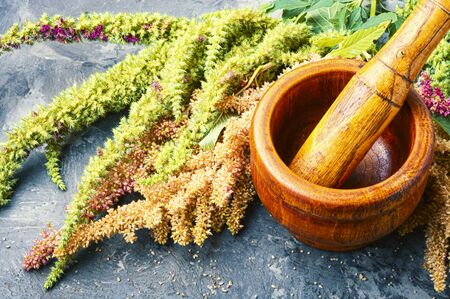 Amaranth or amaranthus.Amaranth inflorescences on a table with mortars.Alternative medicine herbal Stok Fotoğraf