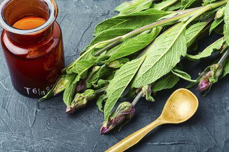 Sage leaves or salvia in herbal medicine.