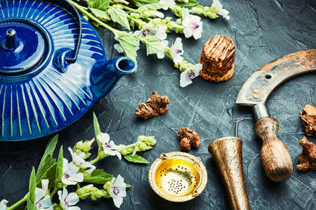 Healing herbal tea from the althaea root in a ceramic teapot. Reklamní fotografie