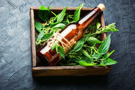 Nettle extract in bottle and fresh nettle leaves. Stinging nettles