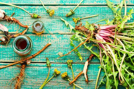 Bottle with tincture of dandelion. Taraxacum, medicinal plants. Dandelion root. Stock Photo