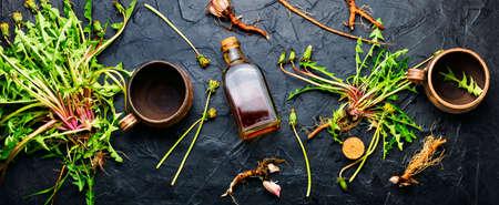 Healing herbs and herbal medicinal roots.Extract of dandelion.Taraxacum, medicinal plants.Dandelion root.