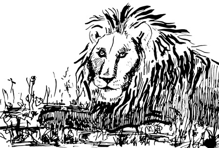 Lion on nature. Illustration