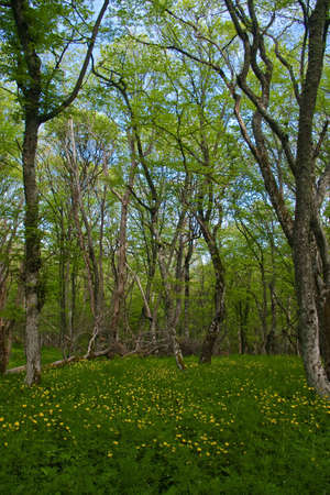 Green glade in young deciduous to wood