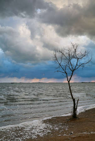 Lonely tree and heavy clouds