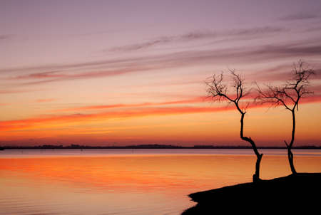 Sunset and a tree by the lake Stock Photo