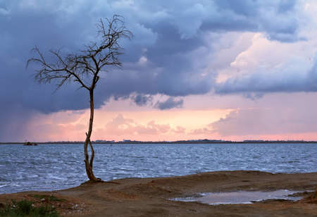 The cloudy sky and storm clouds, lonely tree costs on a wind Stock Photo - 9140972