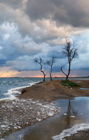 The cloudy sky and storm clouds, lonely tree costs on a wind