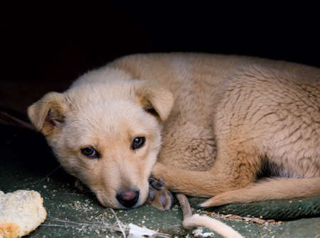 Little homeless puppy Stock Photo - 9141071