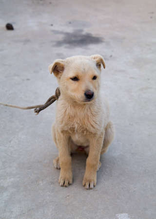 Small stray dog Stock Photo