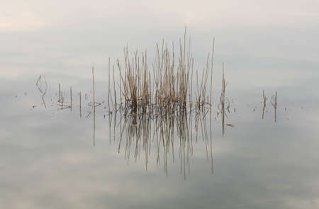 Reflection of dry grass in the water, background Stock Photo