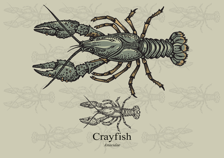 aquaculture: Crayfish. illustration for web, education examples, graphic and packaging design. Suitable for patterns and artwork in small sizes.