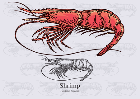 aquaculture: Shrimp (Deep water prawn)