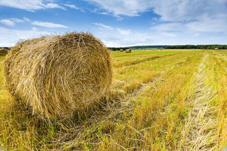 canada agriculture: field