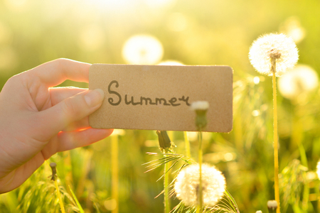 Summer text on a card.  Girl holding card in a field with dandelions  in sunny rays.