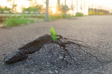 Planta pequeña y verde crece a través del suelo de asfalto urbano. Planta verde que crece de la grieta en el asfalto en la carretera. Espacio para texto o diseño.