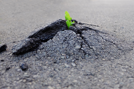 Small and green plant growth through urban asphalt ground. Green plant growing from crack in asphalt on road. Space for text or design.