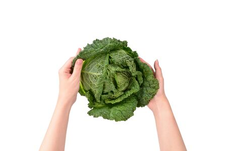 Green cabbage isolated on white background. In woman hands. Stock fotó