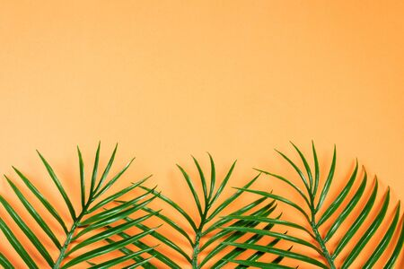 Tropical green leaf lay on orange background. Top view. Copy space.