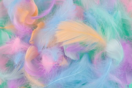 Colorful feather on mint background, top view.
