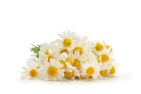 Bouquet of daisies isolated on white background. Zdjęcie Seryjne