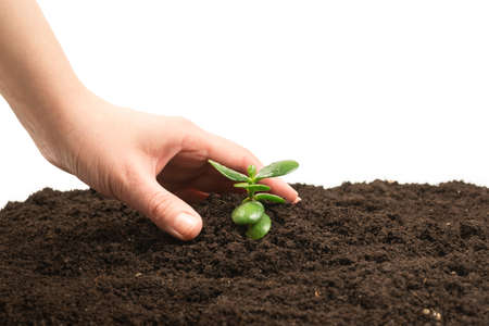 Woman hand holding young green sprout in the ground. Top view.