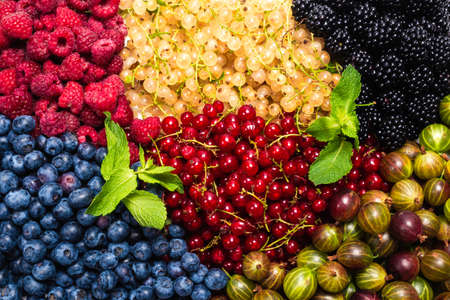 Gooseberries, blueberries, mulberry, raspberries, white and red currants background.