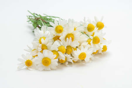 Bouquet of daisies isolated on white background.