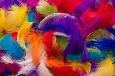 Colorful feather background. Top view.