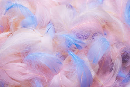 Colorful feather background, top view.