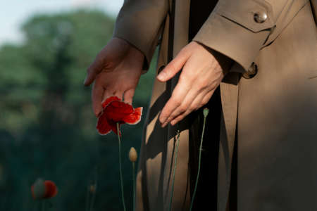 Red poppy in sunny rays in woman hands. Imagens