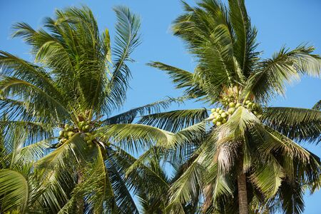 against: palm trees against a blue sky