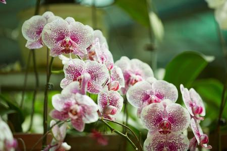 flowering plants: flowering plants in Vietnam