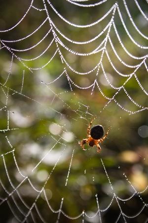 arachnophobia: Spider and web
