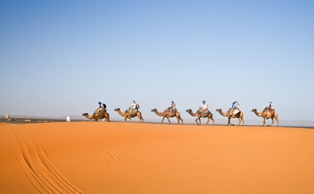 arabic desert: Camel caravan going through the sand dunes in the Sahara Desert, Morocco.