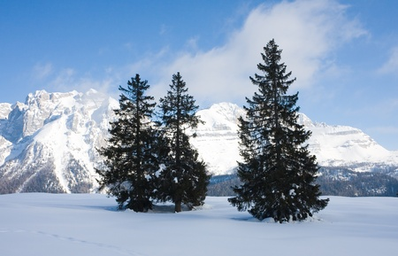spruce and mountain