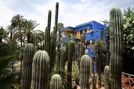 Jardine Majorelle in Marrakesh, Morocco, Africa photo