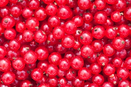 Natural background of berries of a red currant photo